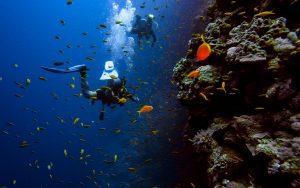 diving-sea